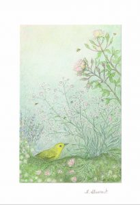 Rose and Warbler Greeting Card Set - H.E. Stewart